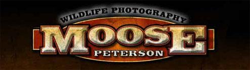Wildlife Photography - Digital cameras, digital camera reviews, photography views and news hot links