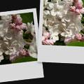 Xerox innovation: Automatic Image Enhancement - Digital cameras, digital camera reviews, photography views and news news