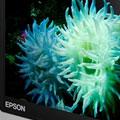 Epson unveils P-5000 and P-3000 Storage Viewer - Digital cameras, digital camera reviews, photography views and news news