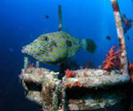 Sandisk Red Sea Underwater Photo competition - Digital cameras, digital camera reviews, photography views and news news