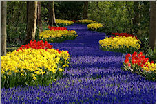 Flower Highway - Copyright © 2008 by Remco