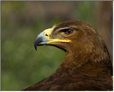 Eagle-eye - Copyright © 2008 by Vladimir Smetanko