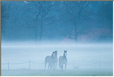 Three horses - Copyright © 2008 by Tom Elst