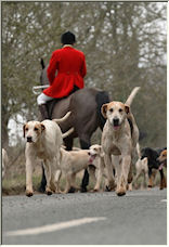 fox hounds - Copyright © 2008 by shaun healy