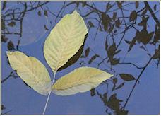 Fall reflection - Copyright © 2008 by vaezi