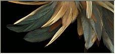 Unstructured feathers - Copyright © 2008 by Cwy332