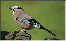 Another Jay - Copyright © 2008 by diamondgeezer