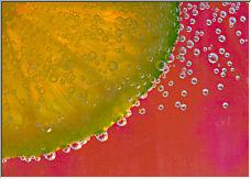 Lemon - Copyright © 2008 by gpaton
