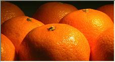 Mandarins - Copyright © 2008 by FrankyNL