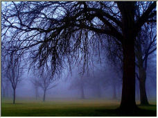 Fog Forest - Copyright © 2008 by petprintz