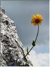 Wallflower 02 - Copyright © 2008 by Ed Francissen