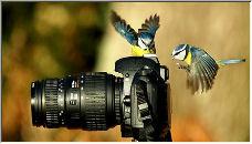 Bird Photography - Copyright © 2008 by Miles Herbert