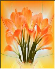 Orange Bouquet - Copyright © 2008 by Shirley D. Cross