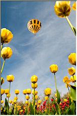 Yellows - Copyright © 2008 by Kimba
