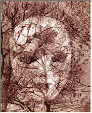 I saw the face in the woods - Copyright © 2008 by driveway03