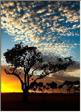 Anakie Tree - Copyright © 2006 by john conway