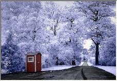 Winter Fresh - Copyright © 2006 by Allen Conrad
