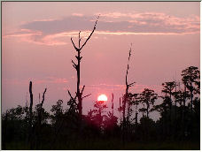 Sunset Marsh 2 - Copyright © 2006 by Marion Brill