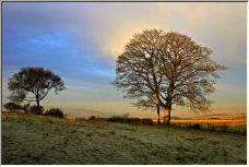 Tree's - Copyright © 2006 by dean lawton