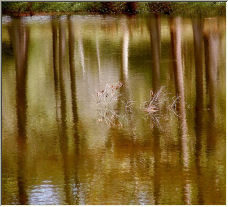 Reflections - Copyright © 2006 by SUE OBRIEN