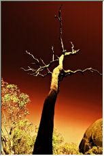 hypnotic tree - Copyright © 2006 by Jesús Daniel Martínez Alday