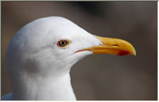Seagull: A closer look - Copyright © 2006 by Rick Smith