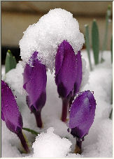 Bundle up little Flowers.... - Copyright © 2006 by Julie Christiansen