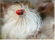 Lady Bird - Copyright © 2006 by Sarah Newton