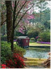 Lakeside Garden - Copyright © 2006 by Carolyn Wheeler