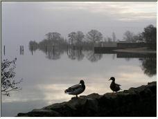 Duck Mist - Copyright © 2006 by Michael Davies