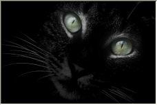 black cat - Copyright © 2006 by Jesús Daniel Martínez Alday
