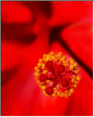 Stamen - Copyright © 2006 by SUE OBRIEN