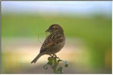 bird - Copyright © 2006 by shafaq ahmed
