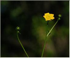 Spring Flower - Copyright © 2006 by albert martin