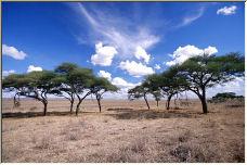The Savannah of Tanzania - Copyright © 2006 by Wayne Pinkston