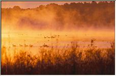 Ducks In The Mist - Copyright © 2006 by Eddie Fleming