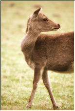 Oh Deer - Copyright © 2006 by Geoff Taylor