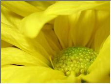 Mellow Yellow. - Copyright © 2006 by Pete_Talanca