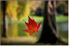 Fall - Copyright © 2006 by CaptiveLight