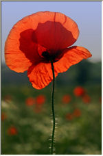 Remember - Copyright © 2007 by PhotoMan