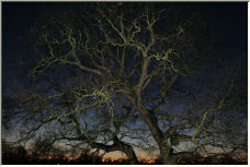 tree - Copyright © 2007 by Skydiver