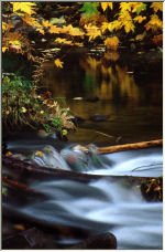 Salmon River Reflections - Copyright © 2007 by Shirley D. Cross
