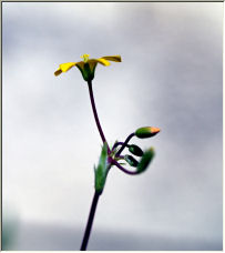 Tiny Yellow - Copyright © 2007 by Clearvision