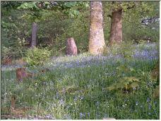 Spring near Grasmere - Copyright © 2007 by flyfisher1