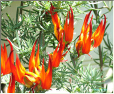 Flames - Copyright © 2007 by Petronella