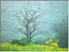 Dead Tree - Copyright © 2007 by stubborntaurus