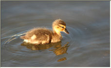 The Ugly Duckling - Copyright © 2007 by Zagpuss