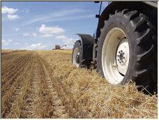 Harvest time - Copyright © 2007 by Nazbag