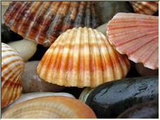 Shells in the rain - Copyright © 2007 by megmetcalfe