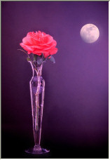Rose by moonlight - Copyright © 2007 by Martin WilliamsShirley D. Cross
